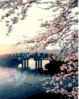 Картина по номерам 40*50 см,  Цветение сакуры