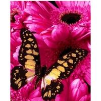 Картина по номерам 40*50 см, Бабочка и астры