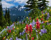 Картина по номерам 40*50 см,  Цветы в лесу