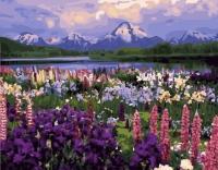 Картина по номерам 40*50 см,  Долина цветов