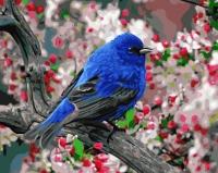 Картина по номерам 40*50 см,  Птица в саду