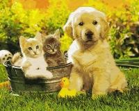 Картина по номерам 40*50 см,  Щенок и котята