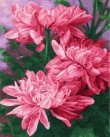 Картина по номерам 40*50 см, Три розовых пиона