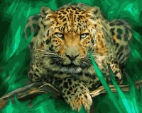 Картина по номерам 40*50 см, Леопард - дикий кот